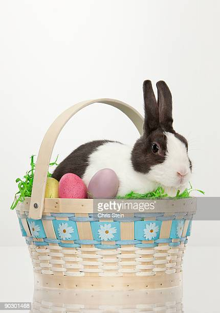 Bunny Rabbit Easter Basket