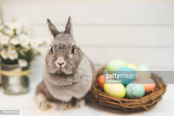Bunny rabbit watching over basket of Easter eggs