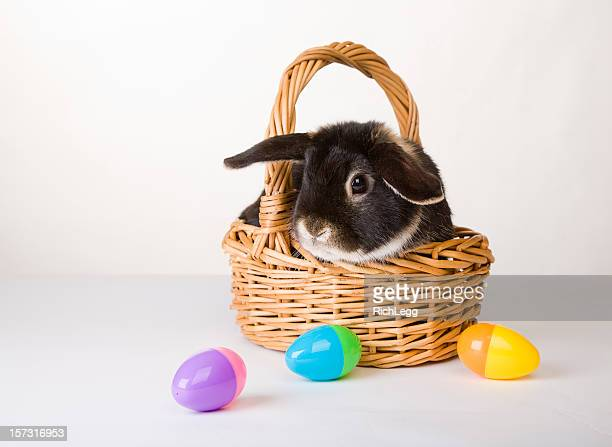 bunny series - easter basket stock pictures, royalty-free photos & images