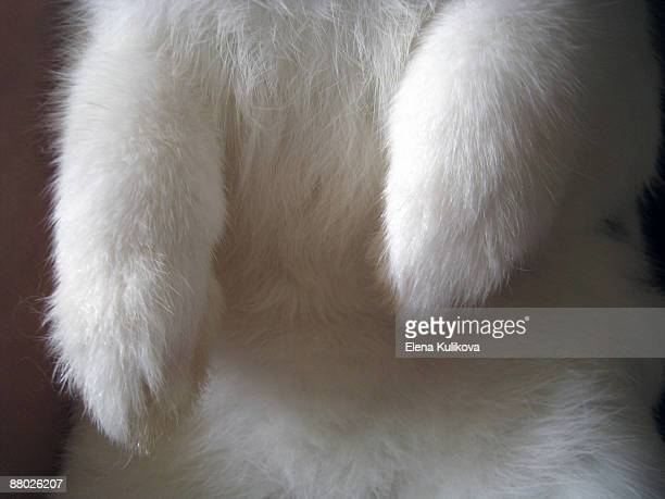 bunny twice the luck - white rabbit stock pictures, royalty-free photos & images