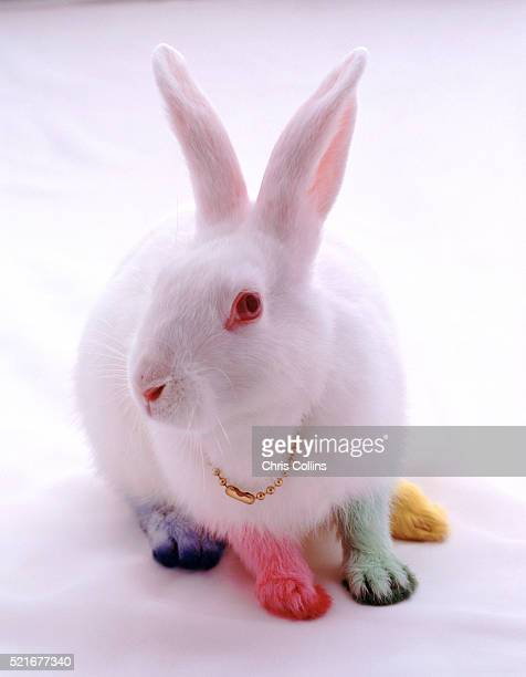 Bunny with Colored Feet