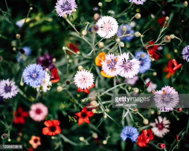 bunte blumenwiese - flower head stock pictures, royalty-free photos & images