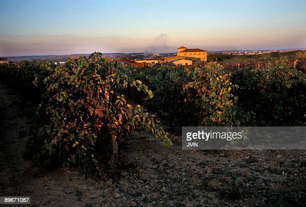 Burgos Vineyards landscape and cellar in the Ribera del Duero near Aranda