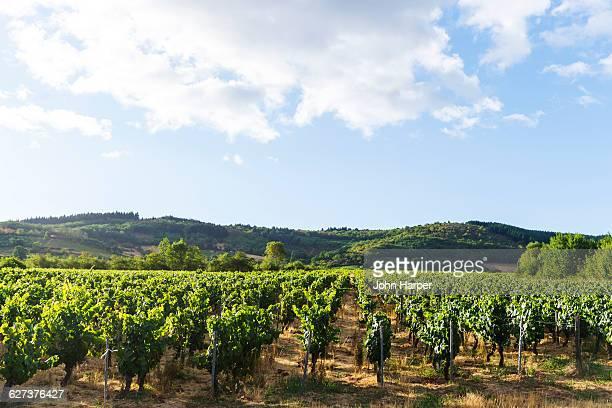 Burgundy vineyards, France