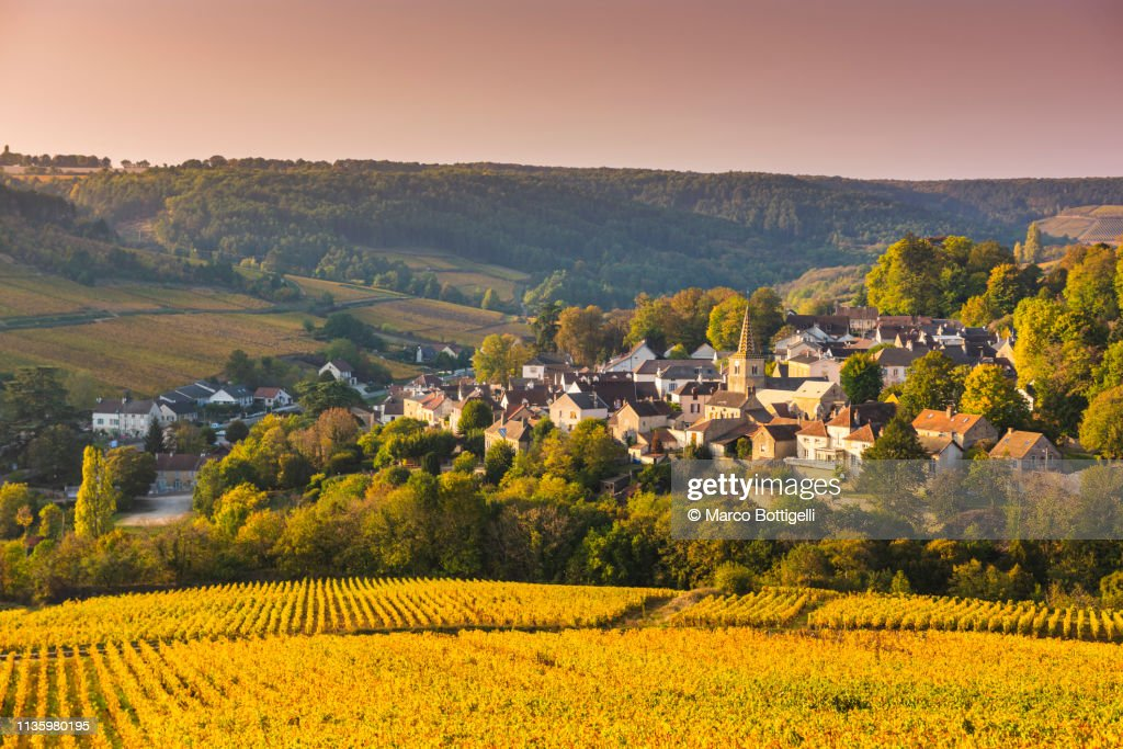 Burgundy vineyards in autumn, Pernand-Vergelesses, France : Stock Photo