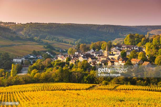 burgundy vineyards in autumn, pernand-vergelesses, france - villaggio foto e immagini stock