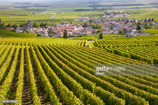 burgundy vineyards - wine harvest stock pictures, royalty-free photos & images