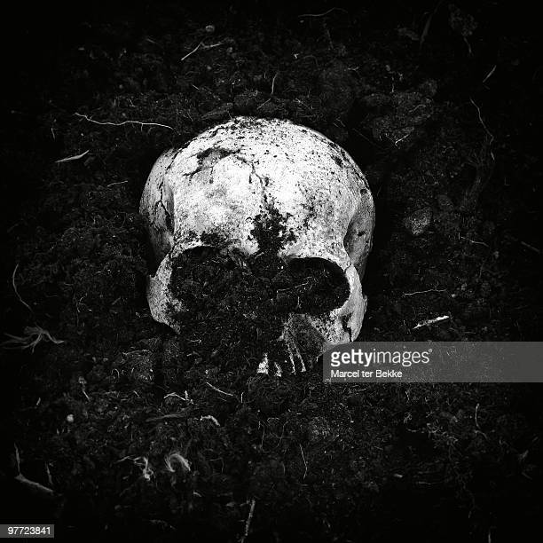 buried skull - human skull stock pictures, royalty-free photos & images