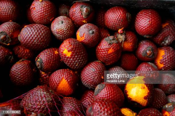 Buriti, Fruit Of Moriche Palm, Para State, Brazil