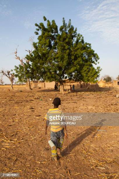 burkina faso, 10-year-old child returning with the cows to his  house, the village of ponsom tenga is located 20 kilometers from ouagadougou - ブルキナファソ ストックフォトと画像