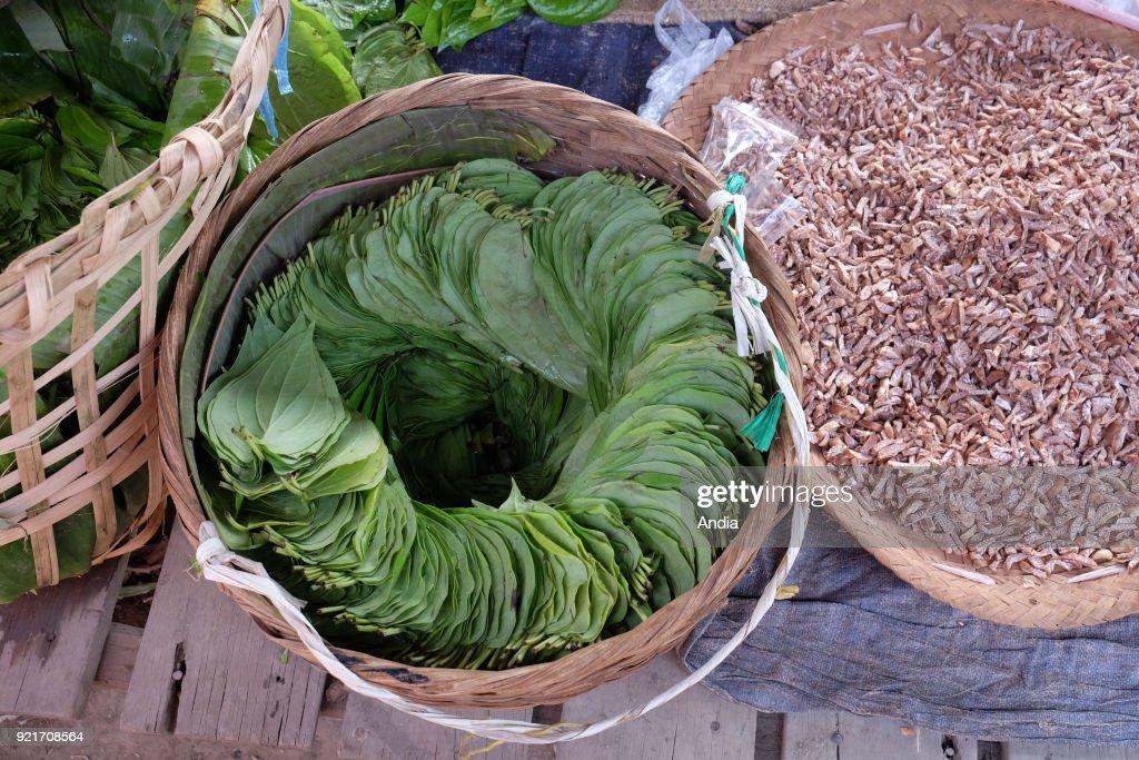 betel leaves at NamPan Market, Inle Lake.