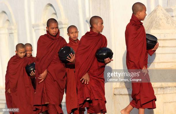 burmese buddhist monks collect alms, myanmar - dietmar temps stock photos and pictures