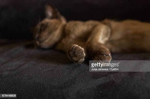 burmese cat sleeping on bed - burmese cat stock pictures, royalty-free photos & images