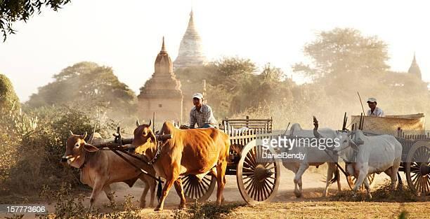 burmesisch landwirte mit cowcart in bagan - ox cart stock-fotos und bilder