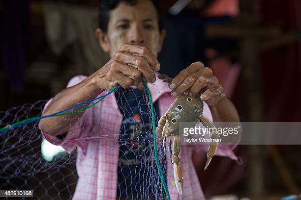 Burmese man removes a crab from netting near the planned Dawei SEZ on August 4 2015 in Maungmagan MyanmarThe controversial multibillion dollar Dawei...