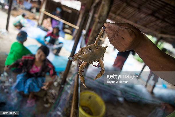 Burmese men and women remove fish and crabs from netting near the planned Dawei SEZ on August 4 2015 in Maungmagan MyanmarThe controversial...