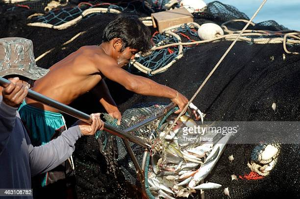 Burmese migrant pulls fish from boat at the Baan Nam Khem pier