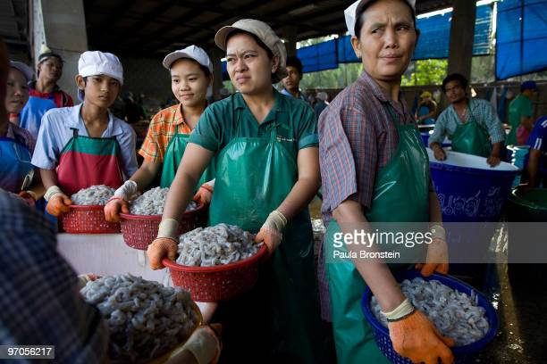 Burmese migrants workers stand in line at a shrimp factory to weigh the cleaned shrimp February 25 2010 in Mahachai Thailand Migrant workers mostly...