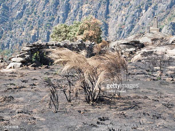 Burned area in the Natural Park of Arribes del Duero between Spain and Portugal. The fire started near the Aldeadavila hydroelectric power station...