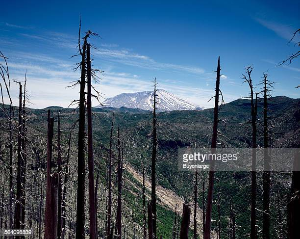 Burned forestland in the foreground, Mount St. Helens volcano in the distance, several years after a cataclysmic eruption in 1980