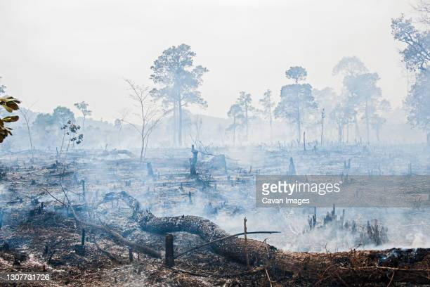 burned forrest to make space for agricultural fields  in laos - burning stock pictures, royalty-free photos & images