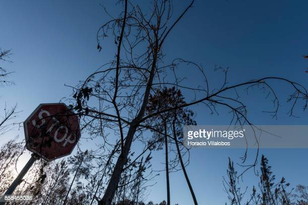 Burned road sign and trees four months after the forest fire on October 06 2017 in Vila Facaia Portugal Pedrogao Grande municipality suffered the...