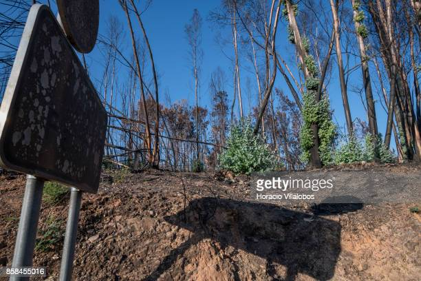Burned road sign and trees recuperating their green four months after the forest fire on October 06 2017 in Vila Facaia Portugal Pedrogao Grande...