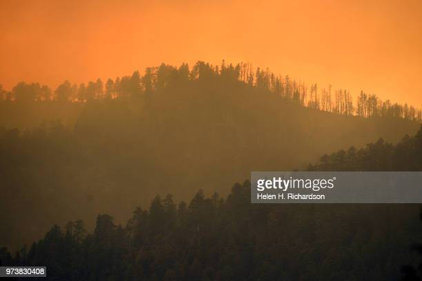 Burned trees along a ridge line can be seen in the forest where the 416 fire burned on June 13 2018 near Hermosa Colorado The fire burning 23 miles...