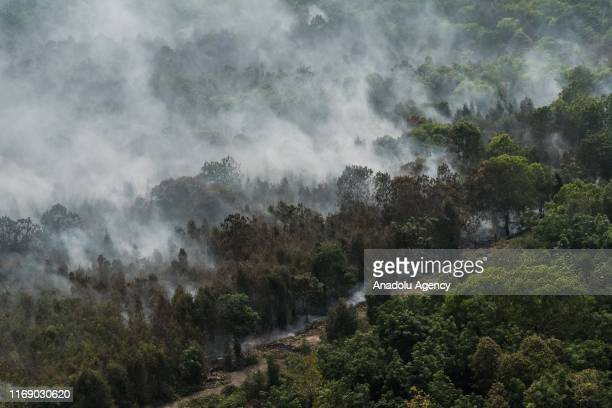 Burned trees covered with thick haze are seen in Palangkaraya Central Kalimantan Indonesia on September 18 2019 National Agency for Disaster...