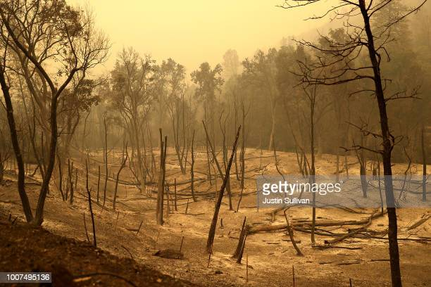 Burned trees rest in a field after the Carr Fire burned through the area on July 29 2018 in Whiskeytown California A Redding firefighter and a...