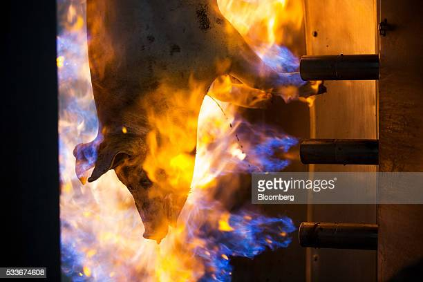 Burners scorch the skin of a slaughtered pig at the slaughterhouse operated by AVK Exima ZAO in Galaktionovsky village near Orel Russia on Thursday...