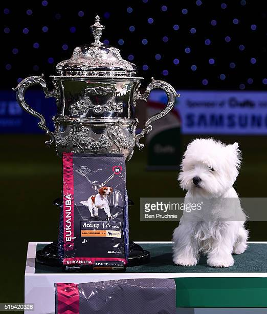 Burneze Geordie Girl wins Best In Show at Crufts Dog Show 2016 on March 13 2016 in Birmingham England First held in 1891 Crufts is said to be the...
