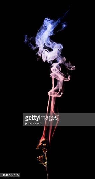 burning branch colored smoke, black background - incense stock photos and pictures