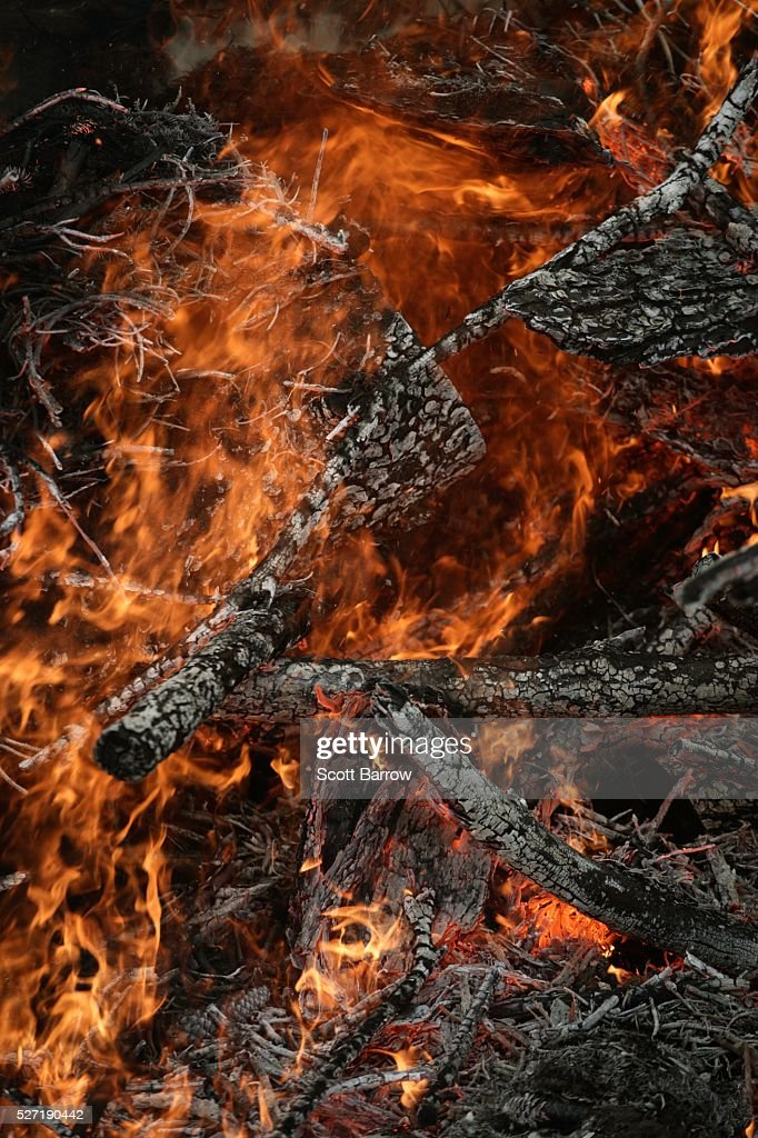 Burning branches : Bildbanksbilder