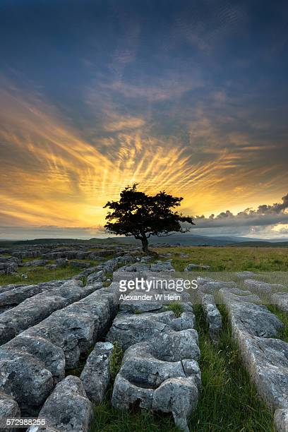 burning bush - limestone pavement stock pictures, royalty-free photos & images