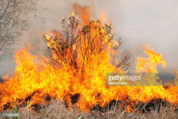 Burning Bush with Grass Fire and Smoke