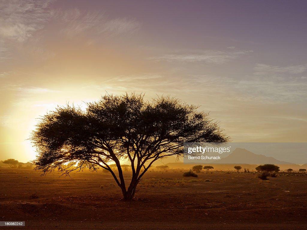 Burning Desert : Stock Photo