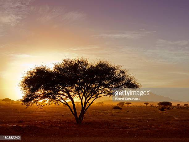 burning desert - bernd schunack stock pictures, royalty-free photos & images