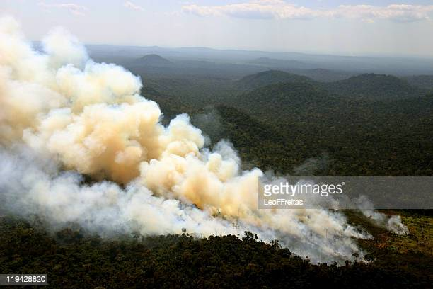 burning - brazil stock pictures, royalty-free photos & images