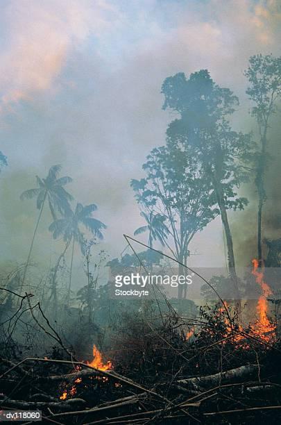 burning rainforest,amazon - amazon rainforest burning stock pictures, royalty-free photos & images