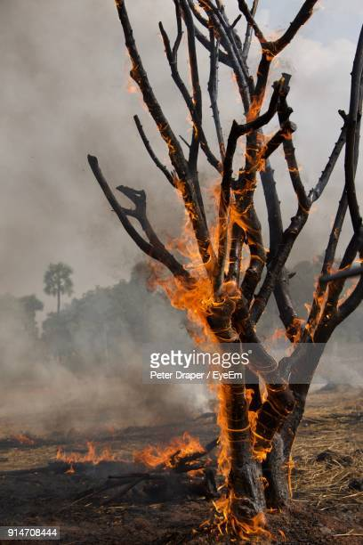 burning tree trunk in forest against sky - burning stock pictures, royalty-free photos & images