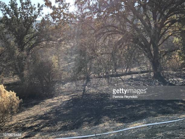 Burnt area in Agoura, CA, USA from 2018 fires.