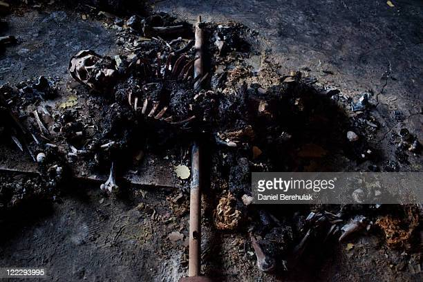 Burnt bodies lay in a warehouse on August 27 2011 in Tripoli Libya Up to 150 people were found dead 53 bodies were burnt in a warehouse in the last...