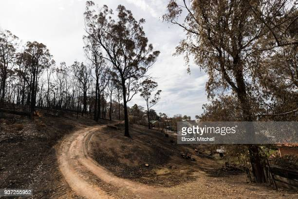 Burnt bushland in Tathra Australia on March 24 2018 A bushfire which started on 18 March destroyed 65 houses 35 caravans and cabins and damaged 48...