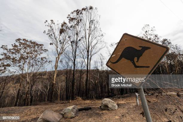Burnt bushland on Thompsons Drive on March 25 2018 in Tathra Australia A bushfire which started on 18 March destroyed 65 houses 35 caravans and...