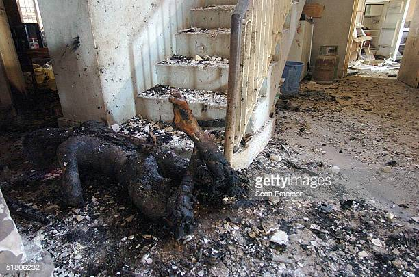 A burnt corpse lay dead after a battle with US Marines in a house that left 3 insurgents one marine dead and three marines wounded November 29 2004...