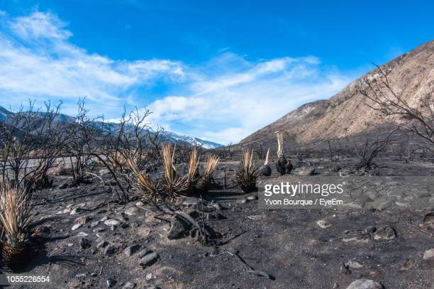burnt forest against sky - ember stock pictures, royalty-free photos & images
