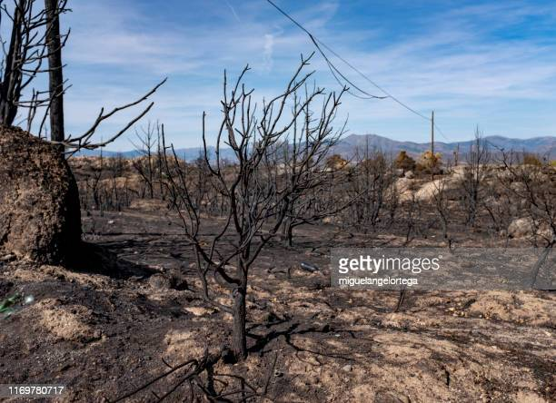 burnt forest - slash and burn stock pictures, royalty-free photos & images