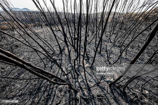 burnt landscape with black charred trees, ash and burnt undergrowth, forest fire, bushfire in australia - australia fire stock pictures, royalty-free photos & images