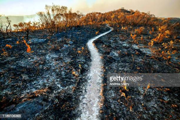 burnt mountain landscape after bushfire, forest fire with hiking track, path in blue mountains, australia - natural disaster stock pictures, royalty-free photos & images